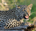 Big Cats of South Africa